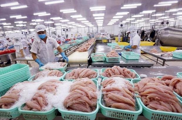 Xuất khẩu thủy sản sang Trung Quốc khó khăn hơn trong bối cảnh dịch Covid-19
