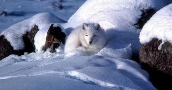 Làm thế nào để động vật và thực vật sống sót qua mùa đông băng giá?