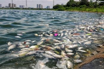 Hàng loạt cá chết bất thường tại hồ Yên Sở