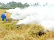 Thứ nguyên liệu ở Việt Nam thường đốt bỏ, Amazon bán 100 USD/tấn
