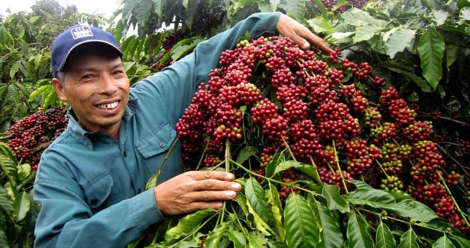 Xuất khẩu cà phê Việt Nam sẽ bứt tốc trong năm 2022?
