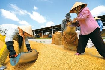 Điểm nghẽn của xuất khẩu lúa gạo