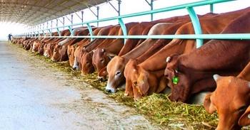 Ngành chăn nuôi tìm thấy nhiều cơ hội trong năm mới