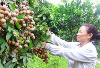 Doanh nghiệp xuất khẩu nông sản Việt tìm đường sangHoa Kỳ