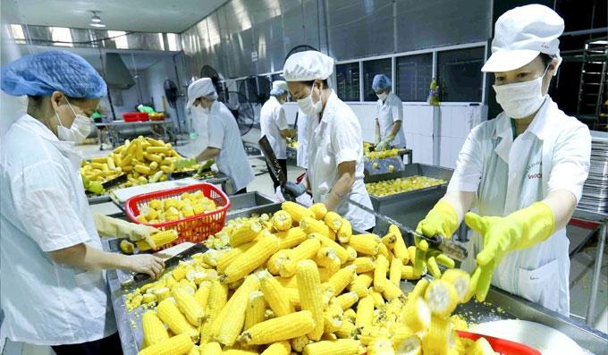 Những tháng đầu năm thị trường rau quả biến động thất thường