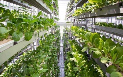 Tín dụng xanh cho ngành nông nghiệp sạch vẫn còn khiêm tốn