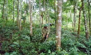 Việt Nam đang đẩy mạnh chuyển hóa rừng kinh doanh gỗ nhỏ sang gỗ lớn
