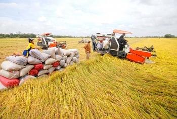 Cần tính toán để xem sản xuất lúa bao nhiêu là phù hợp!