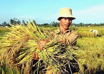 Doanh thu bảo hiểm cho các loại cây trồng, vật nuôi đạt 400 tỷ đồng