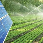 Điện mặt trời kết hợp nông nghiệp và thủy sản đang gặp nhiều trở ngại
