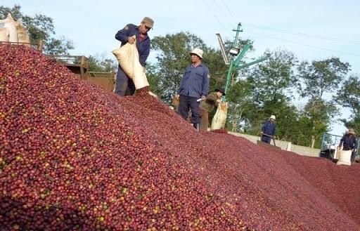 """Lô cà phê Việt đầu tiên sang châu Âu theo """"con đường"""" EVFTA"""