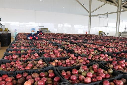 """Hàng loạt nông sản Việt """"đổ bộ"""" thị trường EU theo Hiệp định EVFTA"""