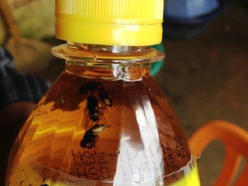 Lại phát hiện dị vật trong chai nước Sting