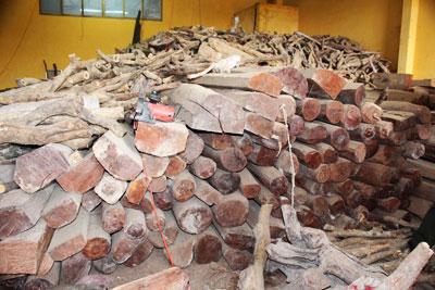 Khánh Hòa: Phát hiện kho gỗ lậu số lượng lớn