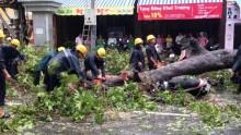 TP HCM: Liên tiếp cây đổ sau mưa, đè trúng người đi đường