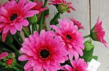 Cận cảnh loại hoa 20 năm không tàn