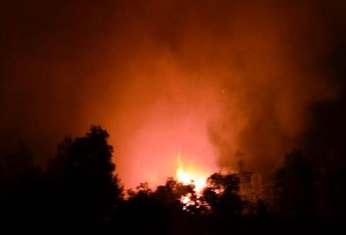 TP HCM: Cháy rừng, hàng chục hộ dân hoảng hốt