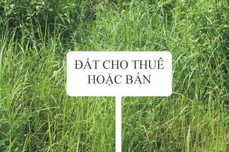 tp hcm go vuong cho nha dat chua co so do