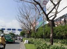 TP HCM: Điều tra nguyên nhân cây xanh chết bất thường