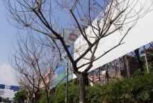 Ai 'đầu độc' cây xanh trên đường Trường Sơn?