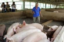 TP HCM: Phấn đấu giảm lượng chất cấm trong thực phẩm