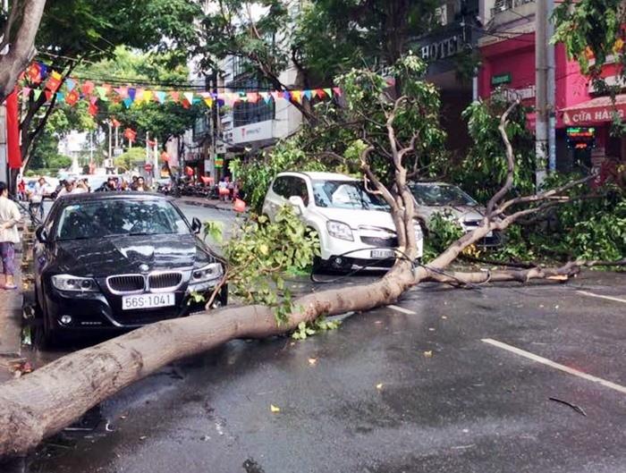 TP HCM: Nhánh cây to rơi trúng 2 ôtô trên đường