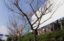 Công an TP HCM vào cuộc vụ cây xanh bị 'đầu độc'