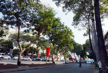 TP HCM tiếp tục đốn hạ 27 cây xanh để làm metro