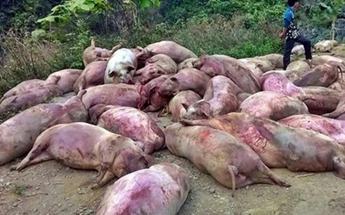 Công ty Đài Loan vứt hàng trăm xác heo thối ra thượng nguồn sông Sài Gòn
