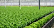 TP HCM thí điểm chợ an toàn thực phẩm
