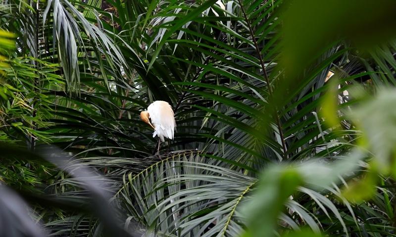 Nâng cao phúc lợi cho động vật hoang dã ở vườn thú