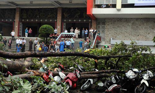 TP HCM: Hàng loạt cây đổ do mưa to, gió giật mạnh