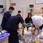Hai người bị chó pitbull tấn công phải nhập viện cấp cứu