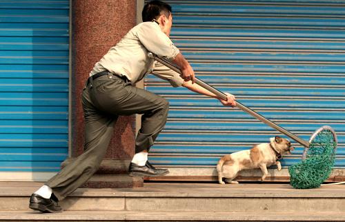 Bắc Giang: Bắt giữ 2 đối tượng trộm chó