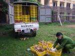 Thu giữ hơn 4.000 con gà nhập lậu từ Trung Quốc