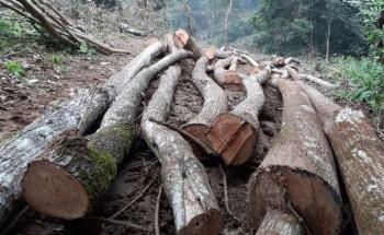 Phú Thọ: Xử lý nhiều cá nhân sau vụ phá rừng đặc dụng tại Vườn Quốc gia Xuân Sơn
