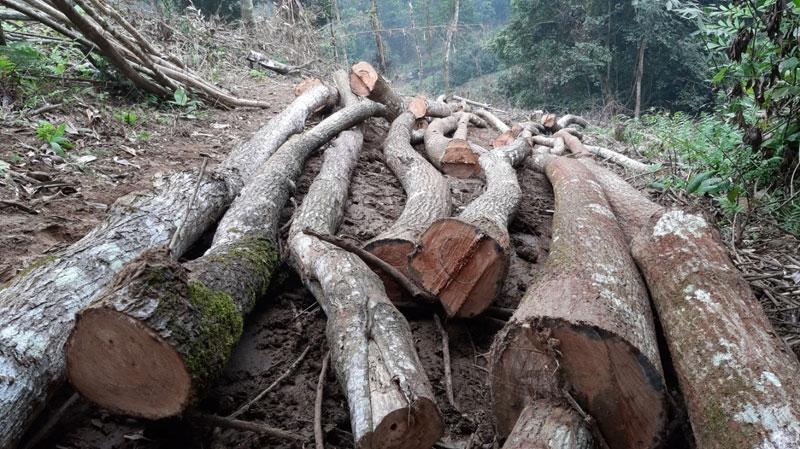 Phú Thọ: Xử lý nghiêm vụ phá rừng đặc dụng tại Vườn quốc gia Xuân Sơn