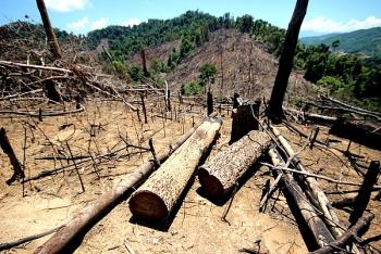 Ngăn chặn tình trạng phá rừng trái pháp luật