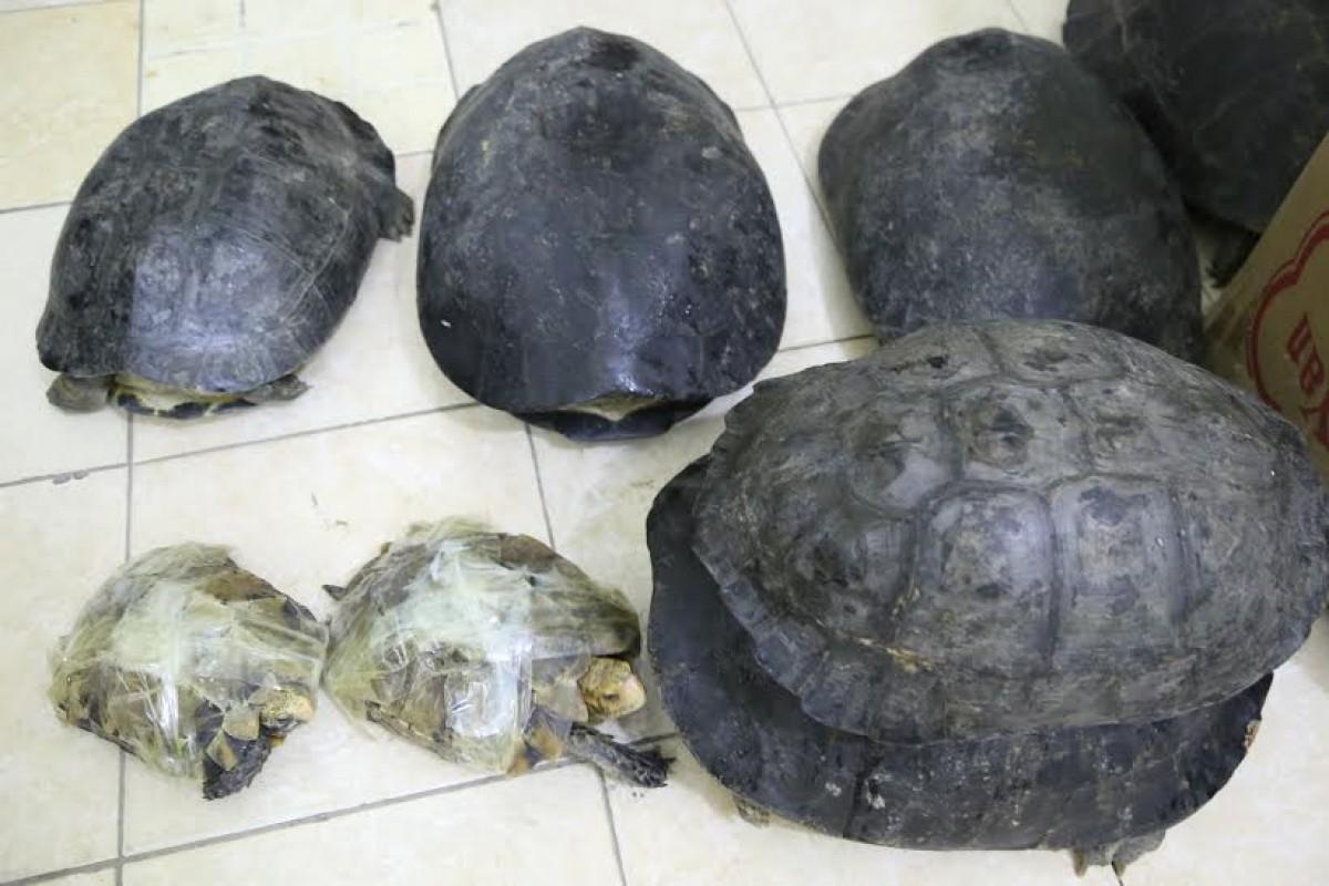 Lạng Sơn: Thu giữ 82kg rùa vô chủ