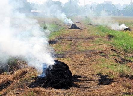 Ô nhiễm không khí gây ra cái chết của nửa triệu trẻ sơ sinh