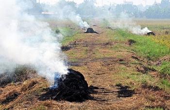 Cảnh báo tình trạng ô nhiễm không khí do đốt rơm rạ