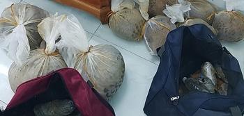 Quảng Ninh: Phát hiện 10 cá thể tê tê trên xe khách