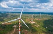 Những tỉnh nào đề xuất chuyển đất rừng làm điện gió?