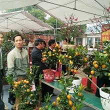 gan 200 doanh nghiep tham gia hoi cho nong nghiep agroviet 2019