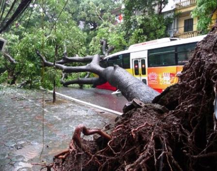 Hà Nội: Mưa lớn, cây cổ thụ đè bẹp xe buýt