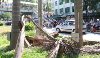[Chùm ảnh] Hà Nội dừng cắt cỏ, đường phố như vườn hoang