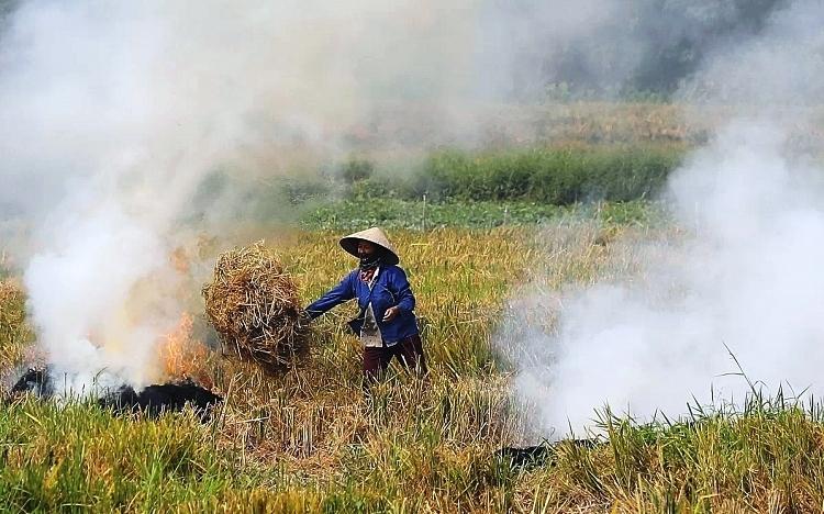 Từ năm 2021, Hà Nội sẽ chấm dứt tình trạng đốt rơm rạ