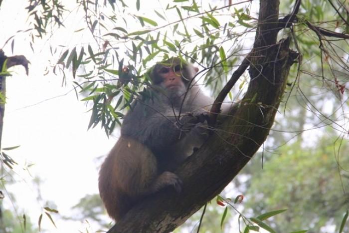 Ghé thăm đảo khỉ đặc biệt ở Việt Nam