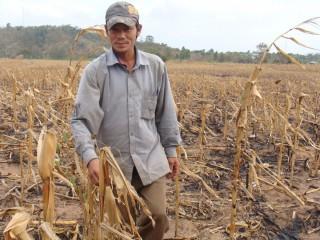 6 tháng đầu năm: Thủy sản giảm, nông nghiệp lao đao