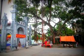 Hà Nội: Vinh danh cây Di sản Việt Nam tại quận Tây Hồ